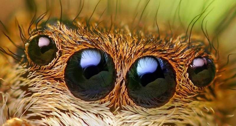 Eksperci ostrzegają przed inwazją pająków - Kierunek Irlandia