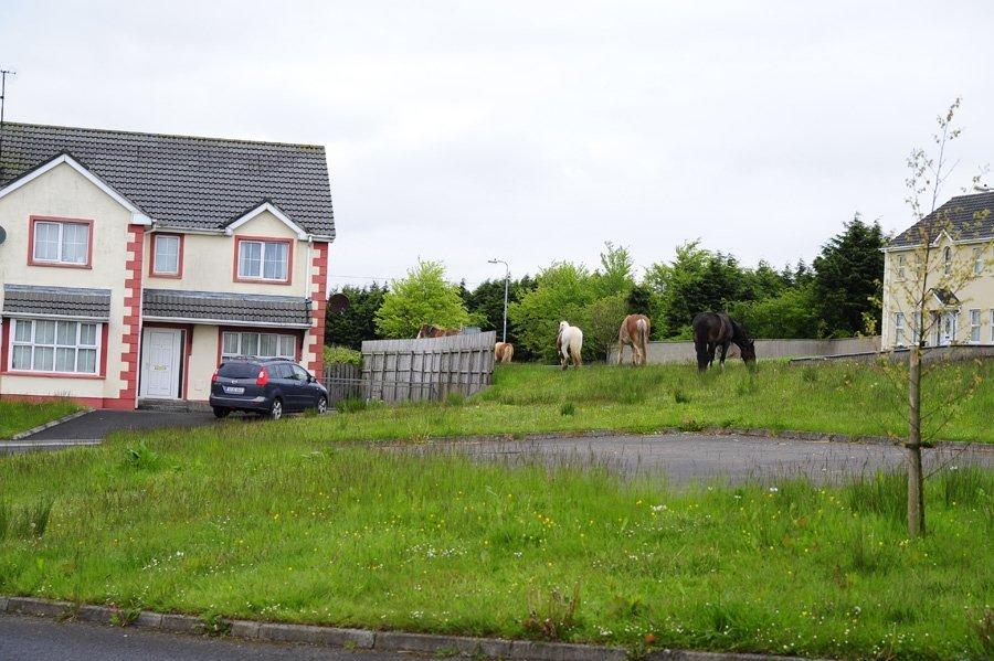 1371290915-konie-przed-domem-044.jpg