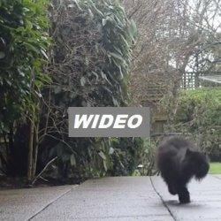 Kot niestety tylko o dwóch łapach