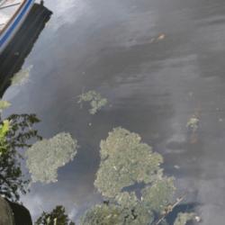 Liczne zatrucia psów po kontaktach z wodą