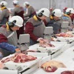Pracownicy fabryki żywności odmówili pracy ze względu na zbyt małe odstępy