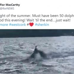 50 delfinów u zachodniego wybrzeża Cork