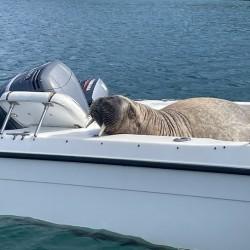 Mors Wally demolował jachty