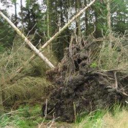 Silny wiatr dokonał zniszczeń w całym kraju