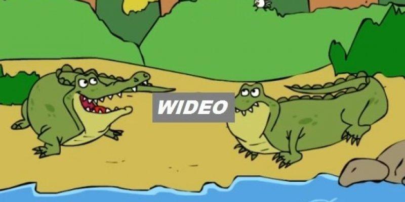Podstępne krokodyle mówią irlandzkim-angielskim, z akcentem Cork
