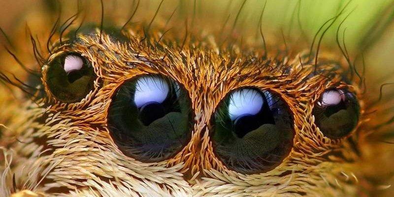 Eksperci ostrzegają przed inwazją pająków