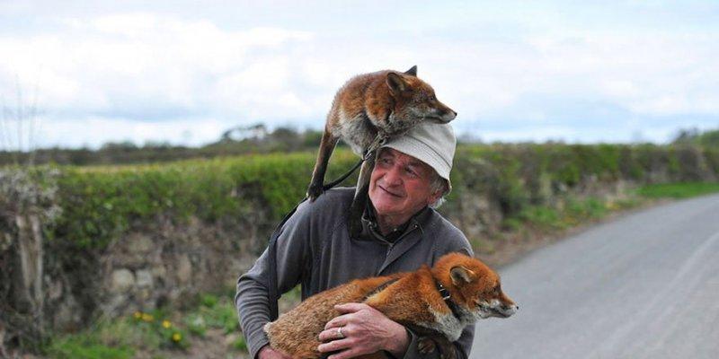 Czy można udomowić lisa ?