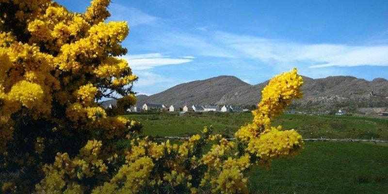 Rekordowy rok dla irlandzkiej branży turystycznej