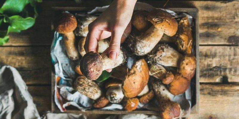 Niebywały urodzaj na grzyby